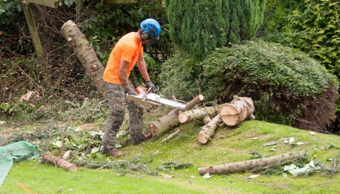 Tree Surgeon in Surrey